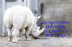 Albino Rhino interviews Darran Bruce from The DJ Sessions